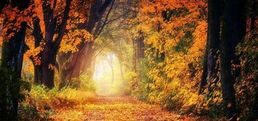 automne-decors-foret